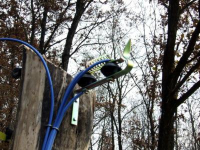 Chemelforest 008