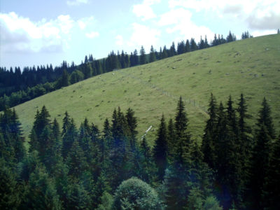 Chemelforest 082